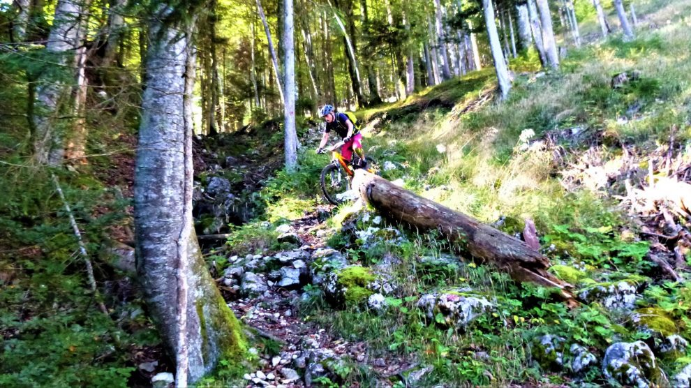 Jocheralm 19er-Trail S3-